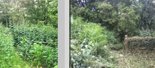 Nettles removed to reveal a path and steps going down through Brearley woods and a bench. Top of Midgley Road